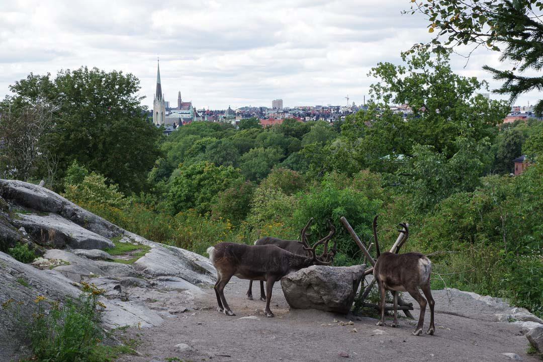 Troupeaux de Rennes - Zoo Nordique de Skansen
