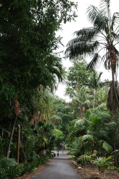 Allee de palmiers au jardin botanique de Sydney