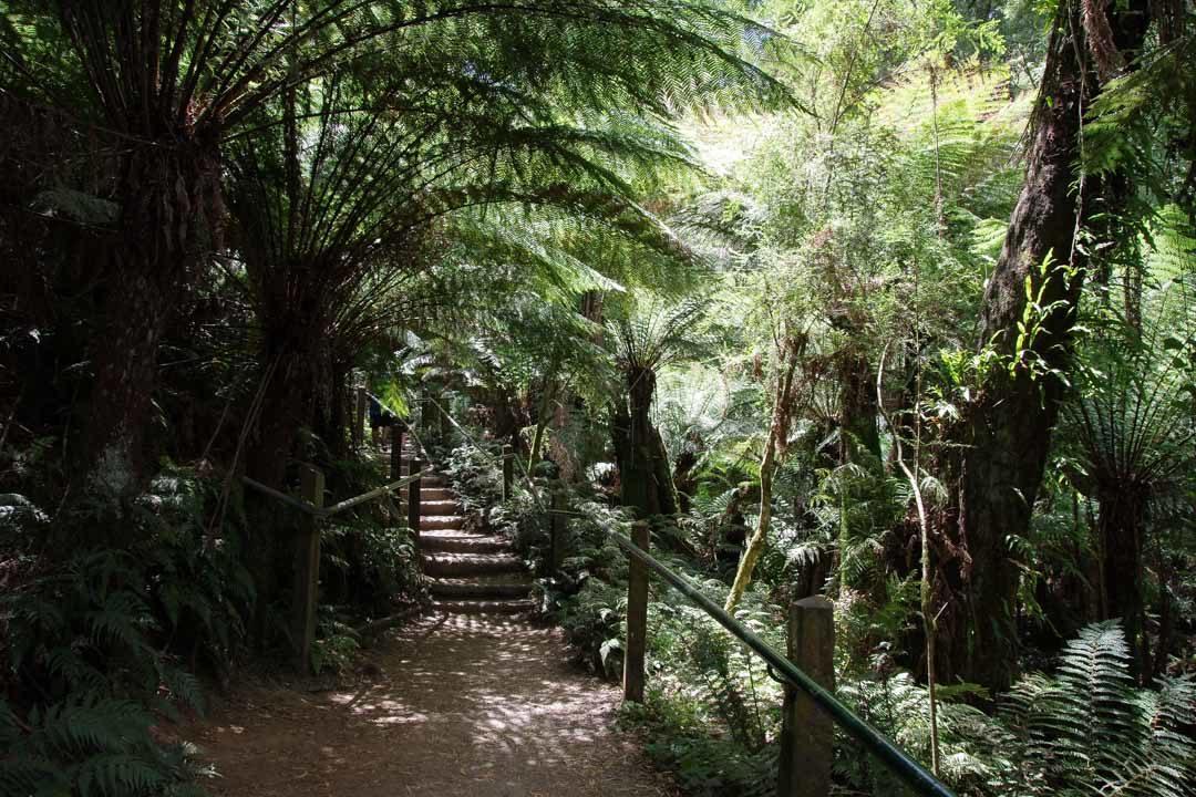 Randonnée des 1000 marches - Dandenong Ranges National Park