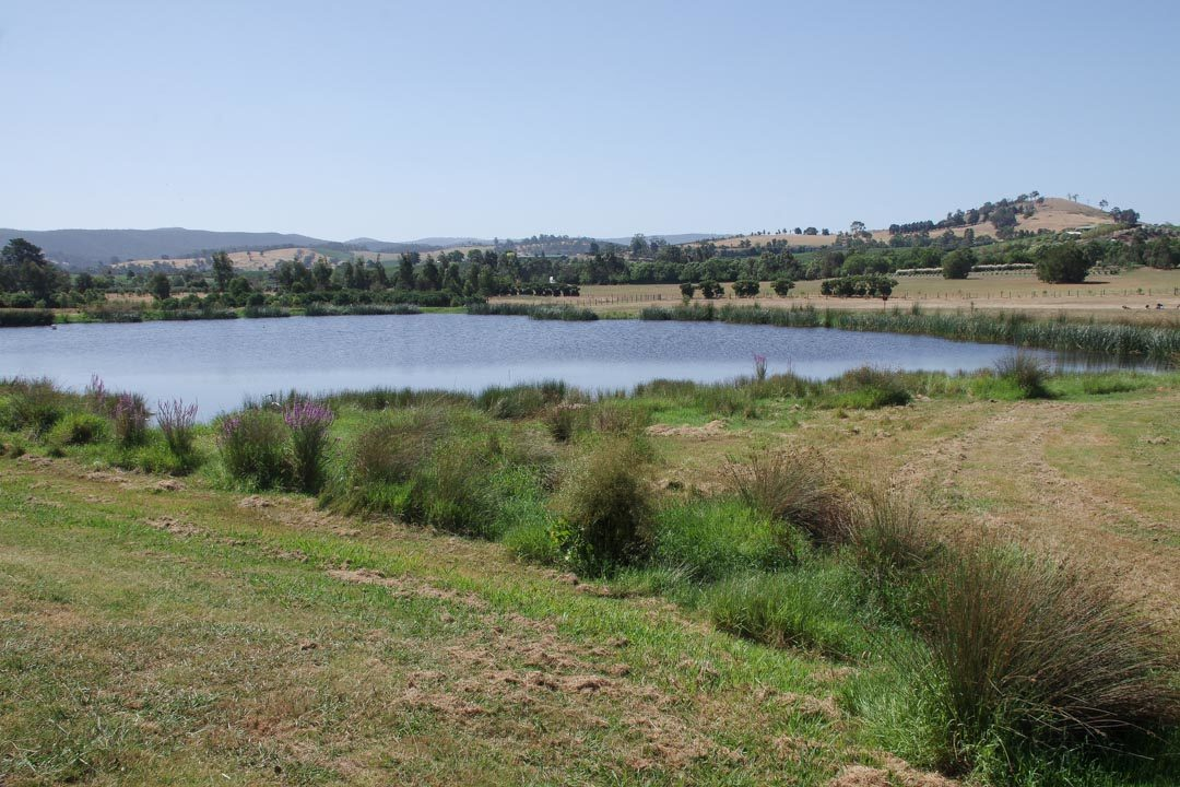 campagne australienne près Healesville