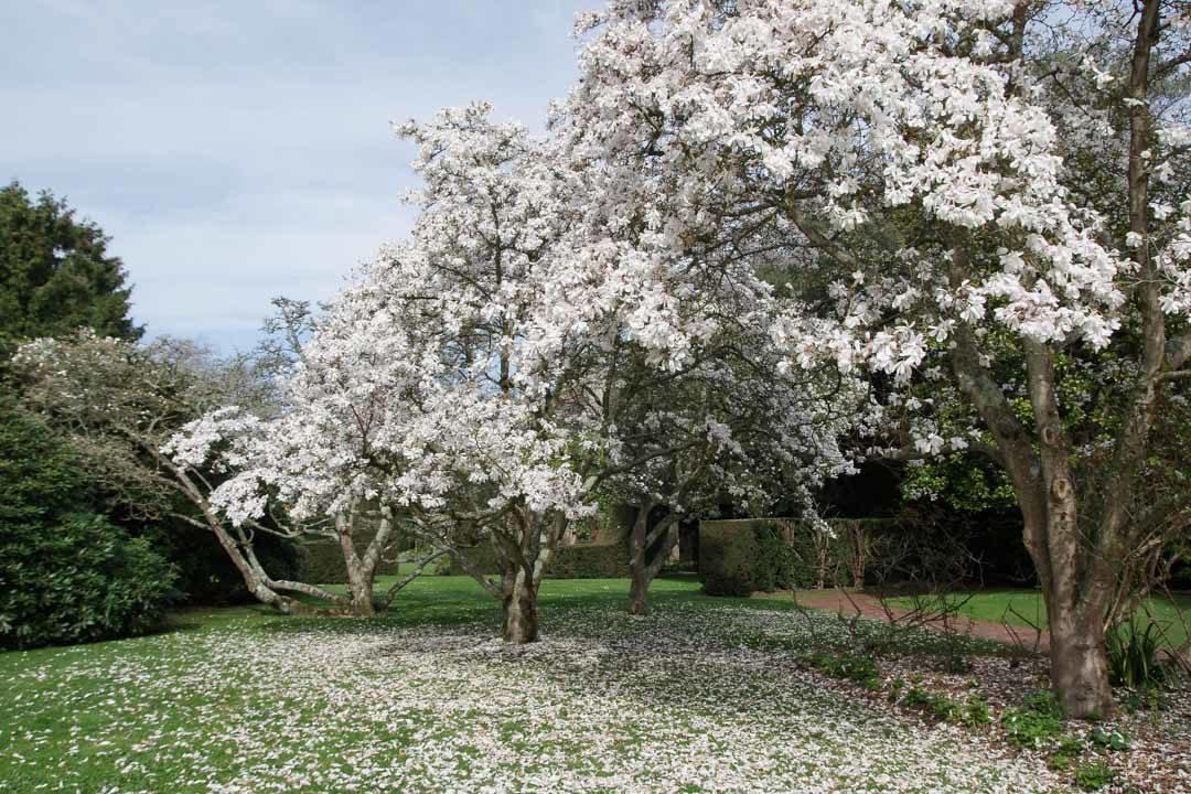 Arbres en Fleurs - Bois des Moutiers