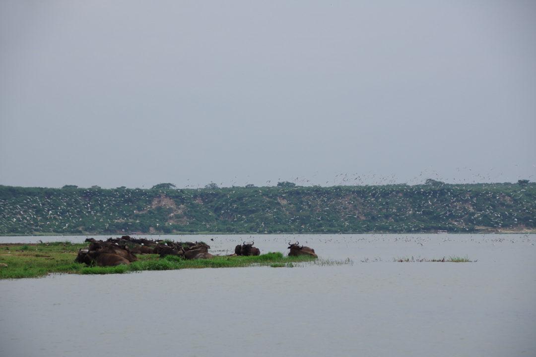 Croisiere sur la Kazinga Channel - Parc National Queen Elizabeth