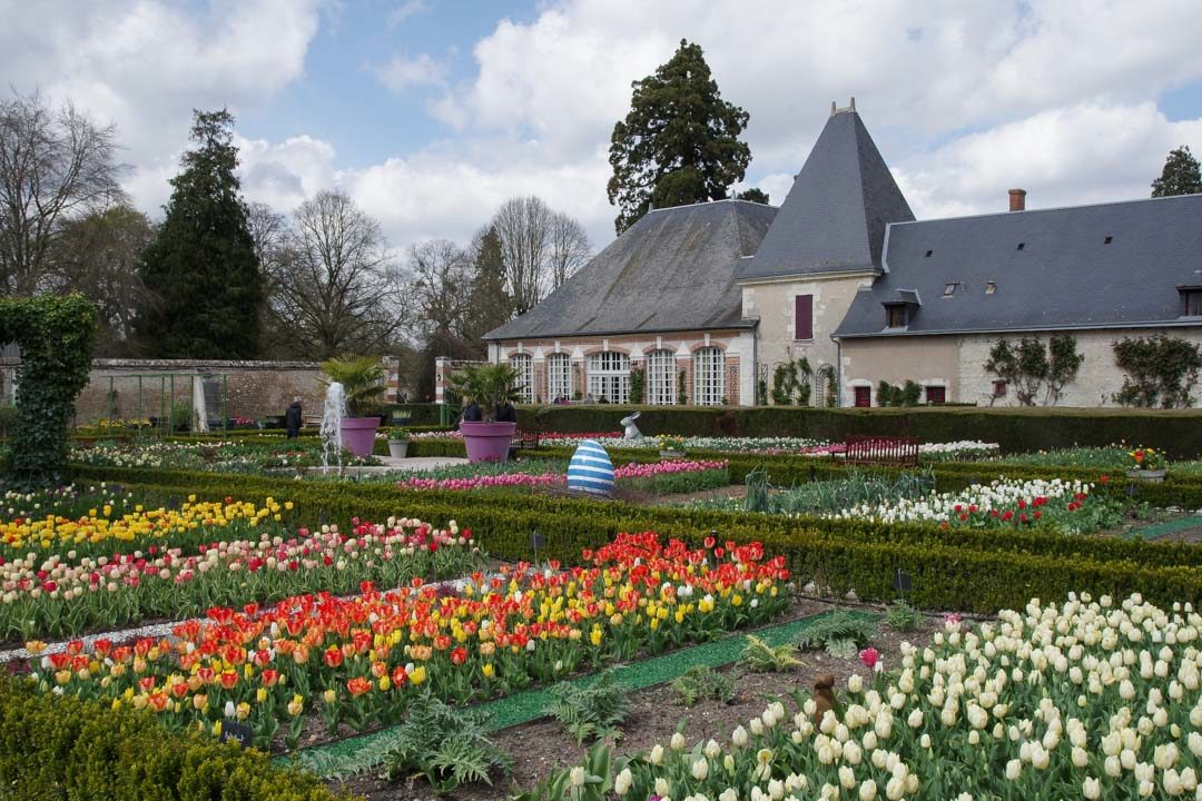 les tulipes du potager de Cheverny