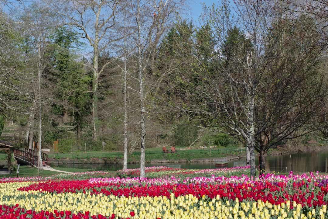 le parterre de tulipes de Cheverny