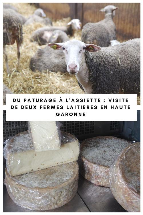 Visite de ferme de production de fromage et de youarts en Haute Garonne