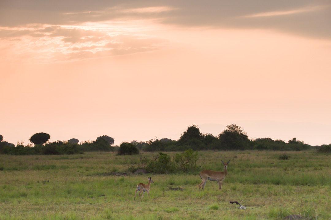 lever de soleil sur la savane africaine
