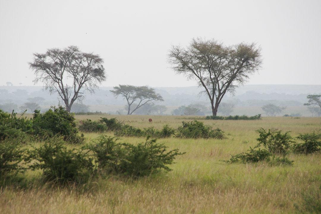 paysage de savane en Ouganda