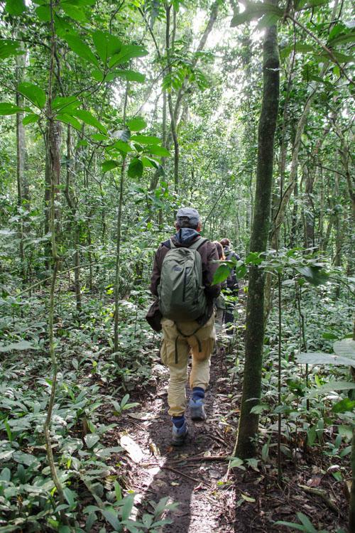 C'est parti pour le trekking chimpanzé dans la forêt de Kibale