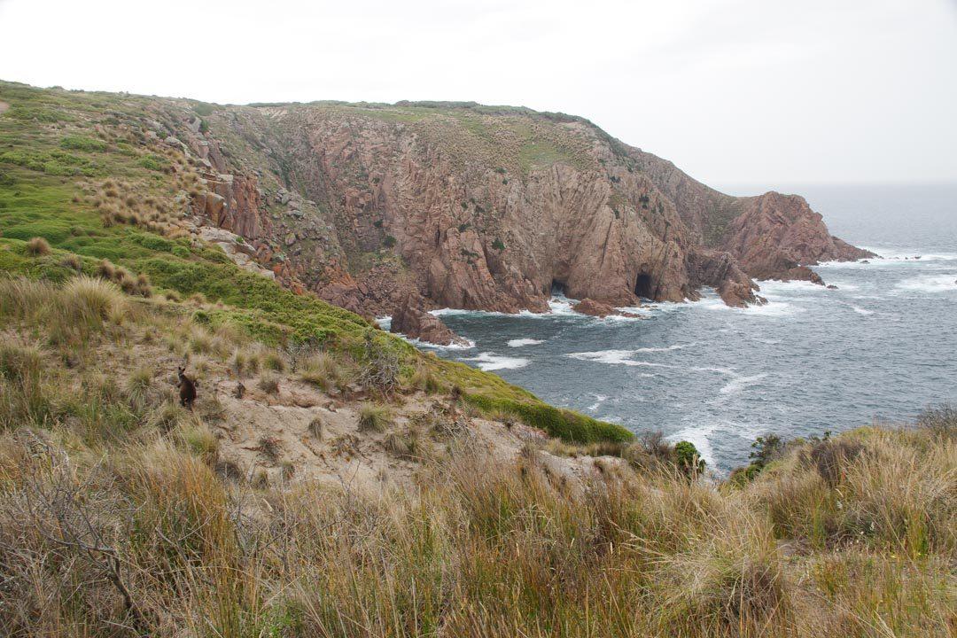 randonnée au Cape Woolamai - Phillip Island