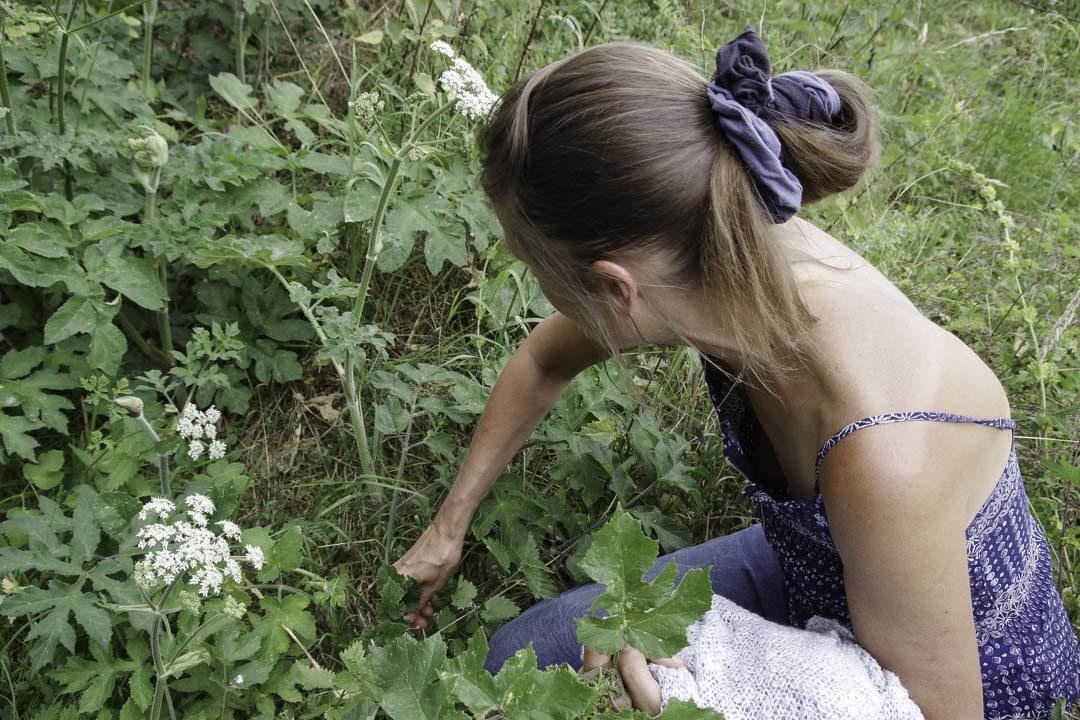 découvrir les plantes sauvages au jardin d'hélène