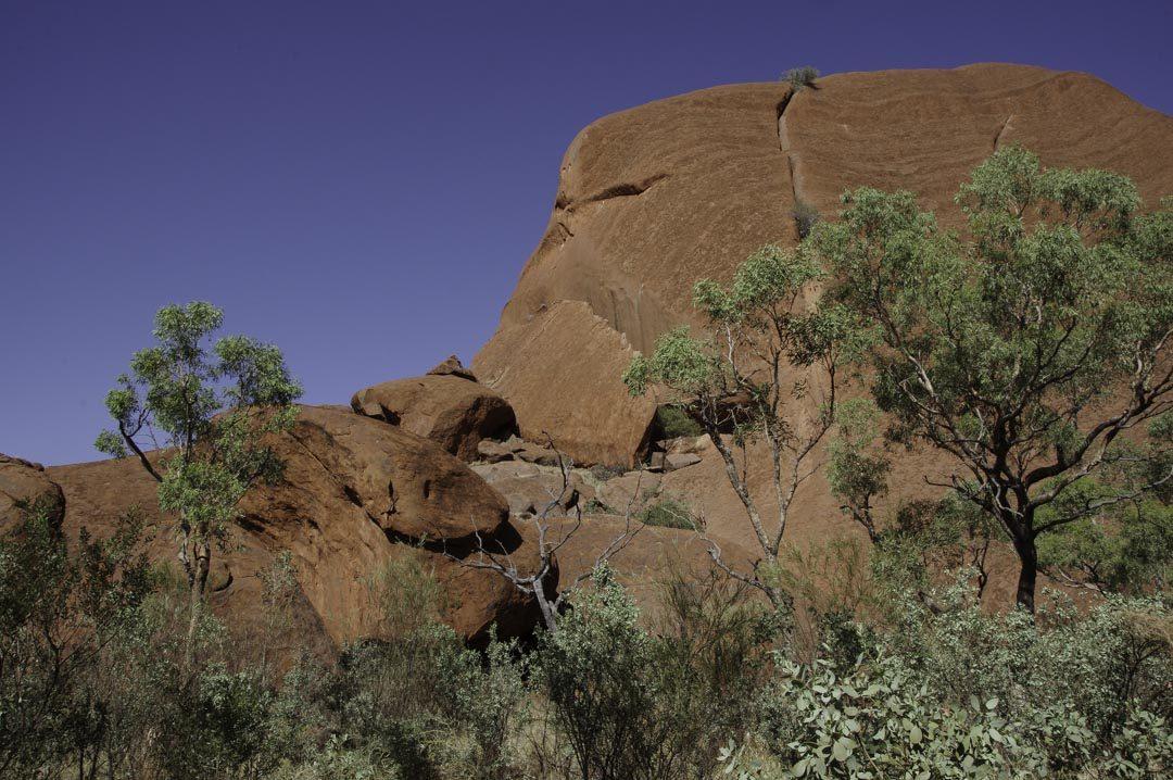Mala Walk - Uluru