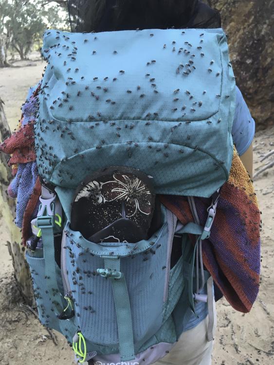 des milliards de mouches dans l'outback australien