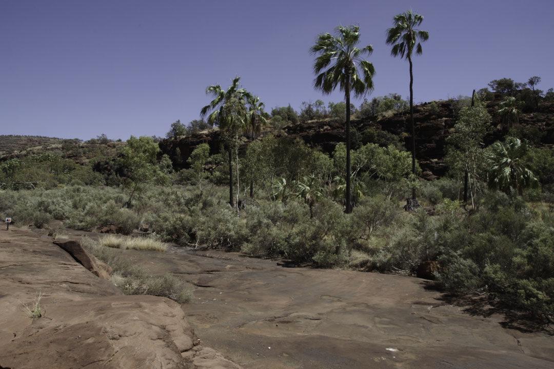 Palm Valley - Finke Gorge NP - Australie