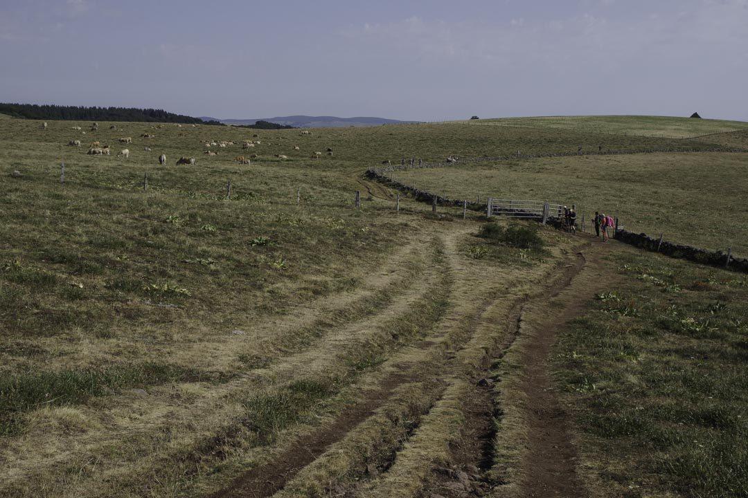 les patures sur le plateau de l'Aubrac