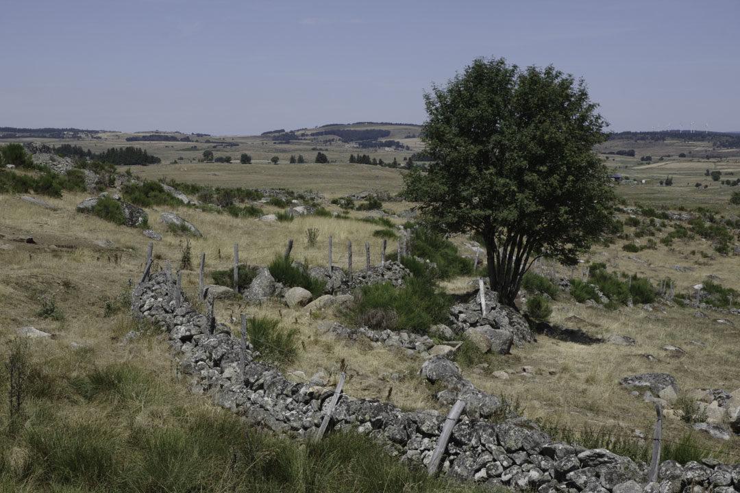 Paysage du plateau de l'Aubrac en Lozère