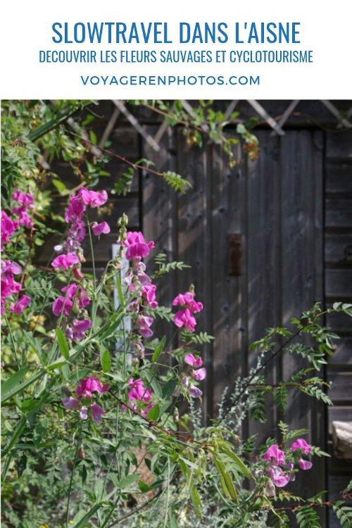 Slowtourisme dans l'Aisne : Eurovéloroute 3 et découverte des plantes sauvages