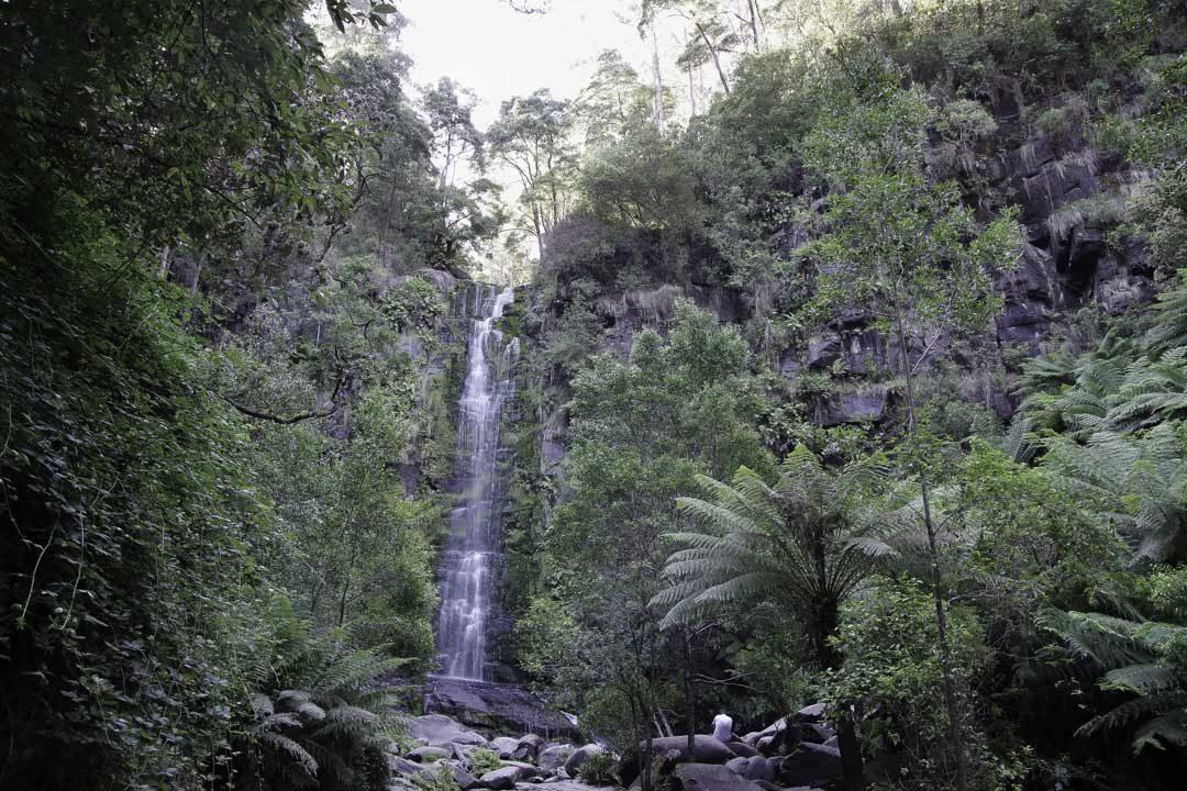 Erksine Falls - cascade sur la Great Ocean Road