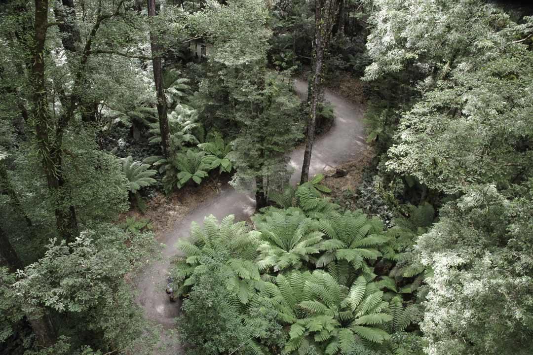 Otway Tree Top Walk : la foret vue de haut