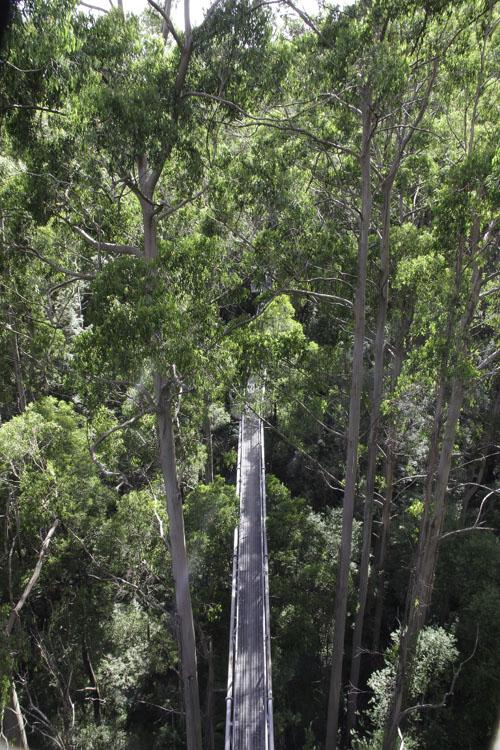 Balade sur les infrastructures de Otway Tree Top Walk
