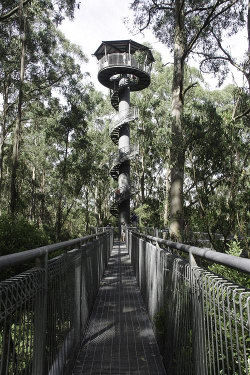 Tour d'observation des cimes de la foret australienne - Otway Tree Top Walk