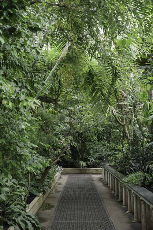 Interieur de la Palm House de Kew Garden