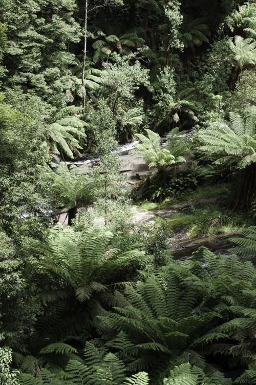 Randonnée dans le parc national de Great Otway