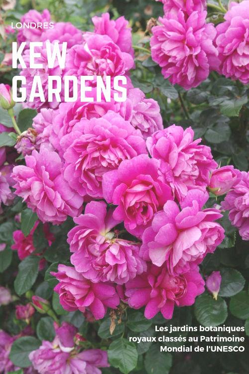 Visite des jardins royaux de Kew Gardens