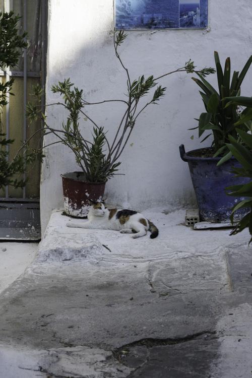 chat dans le quartier d'Anafiotika