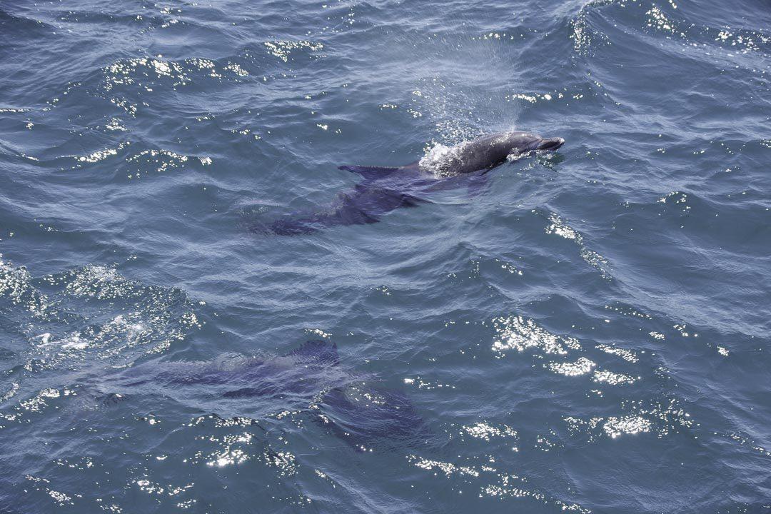 observation des dauphins à Jervis Bay