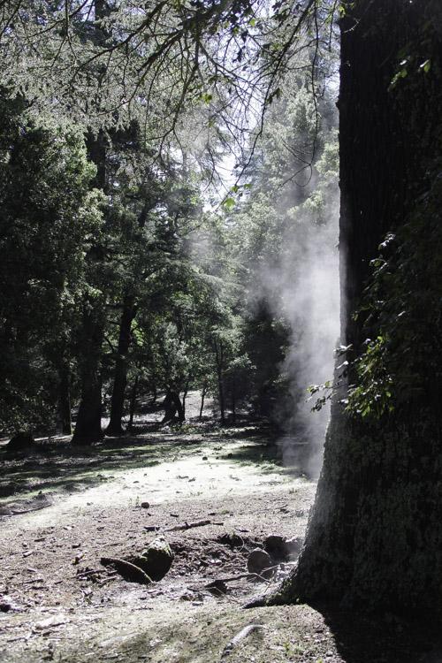 l'eau s'évapore des troncs d'arbre