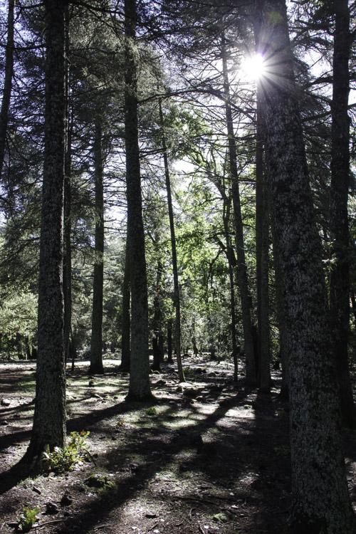 Parc national d'Ifrane au Maroc