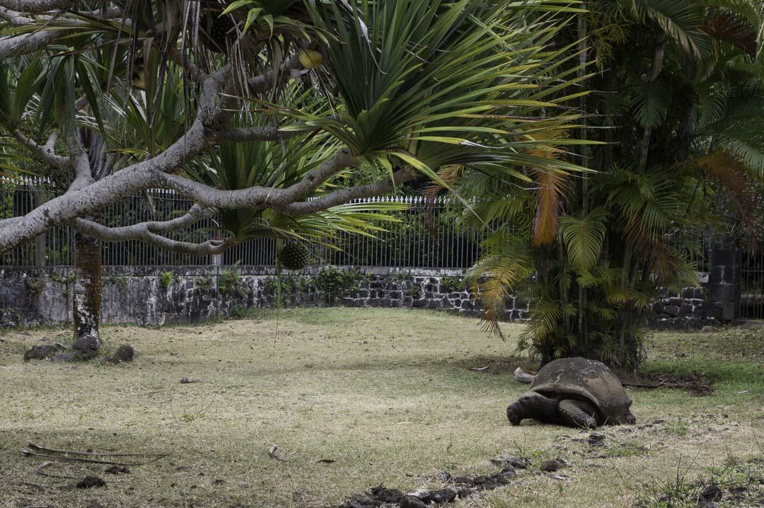 tortue des seychelles - Chateau de LaBourdonnais