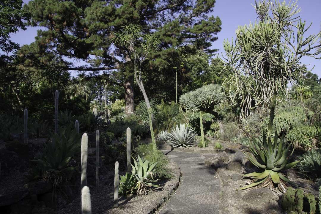 Jardin botanique de Melbourne - Cactus