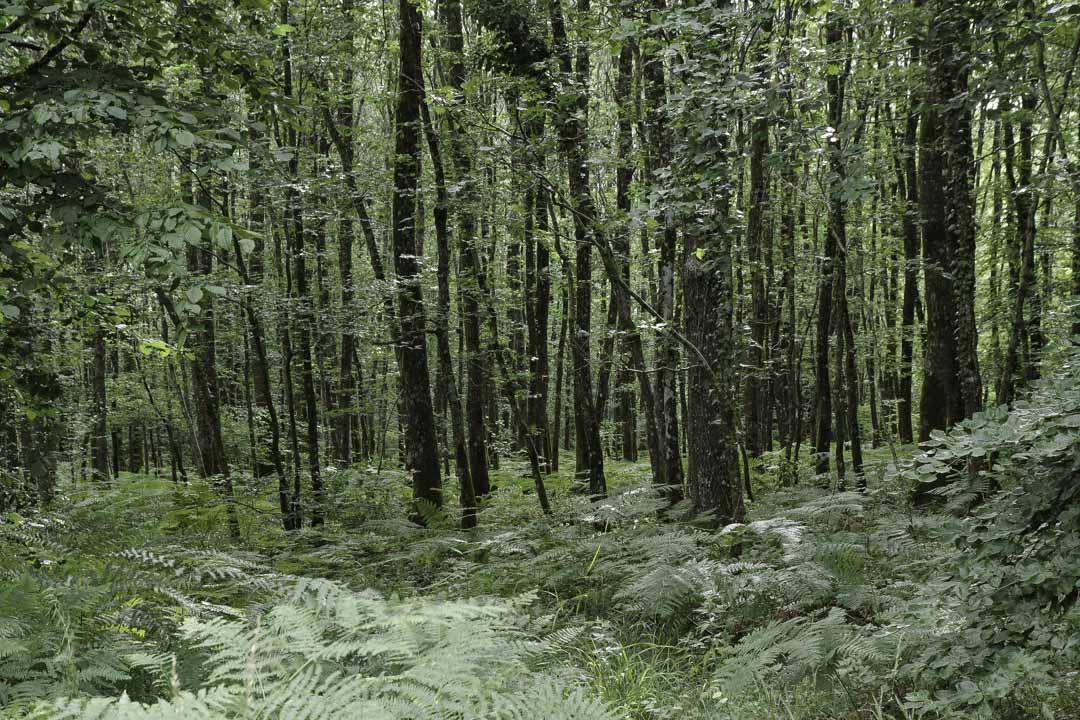 Forêt de Belleme