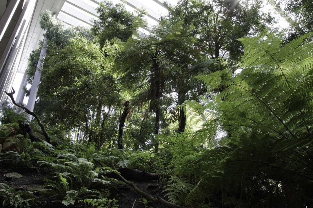 Forêt dans le Musée de Melbourne