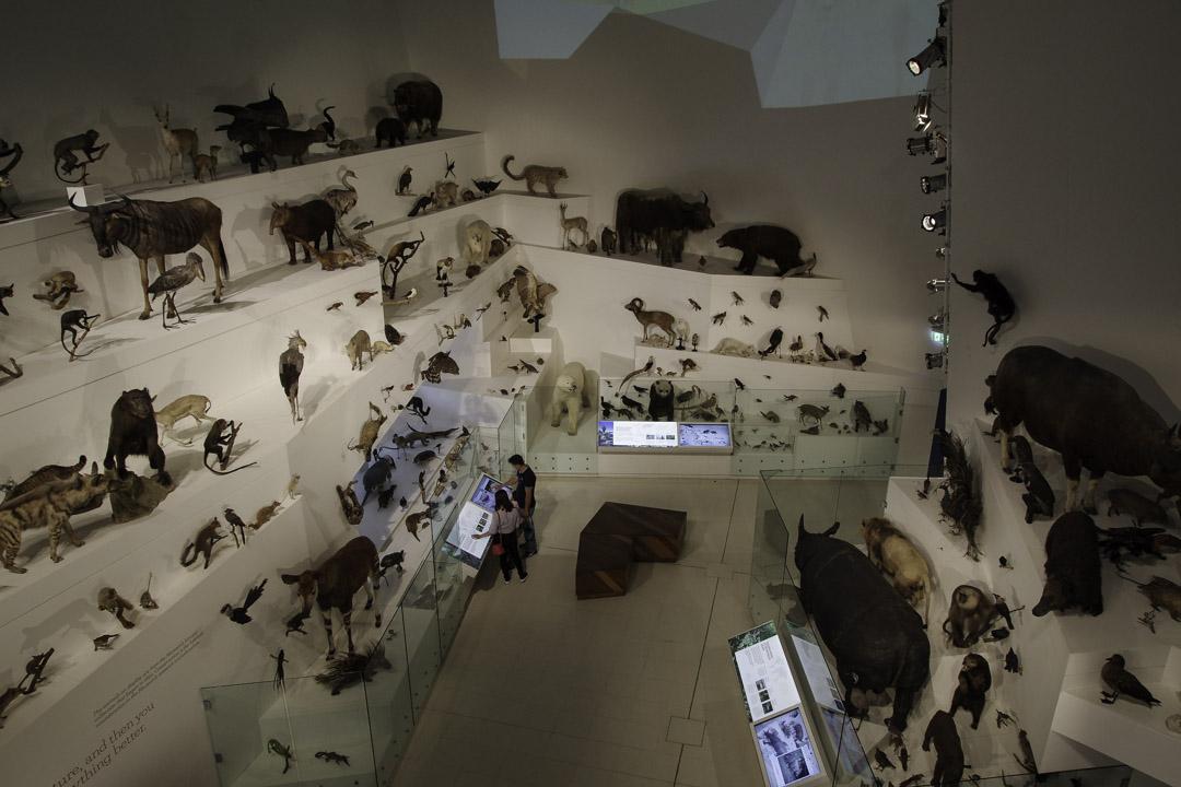 Salle sur l'évolution - Musée de Melbourne