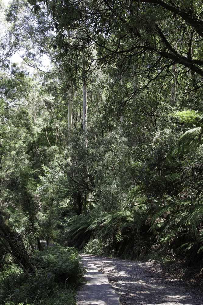 randonné 1000 steps dans les dandenong