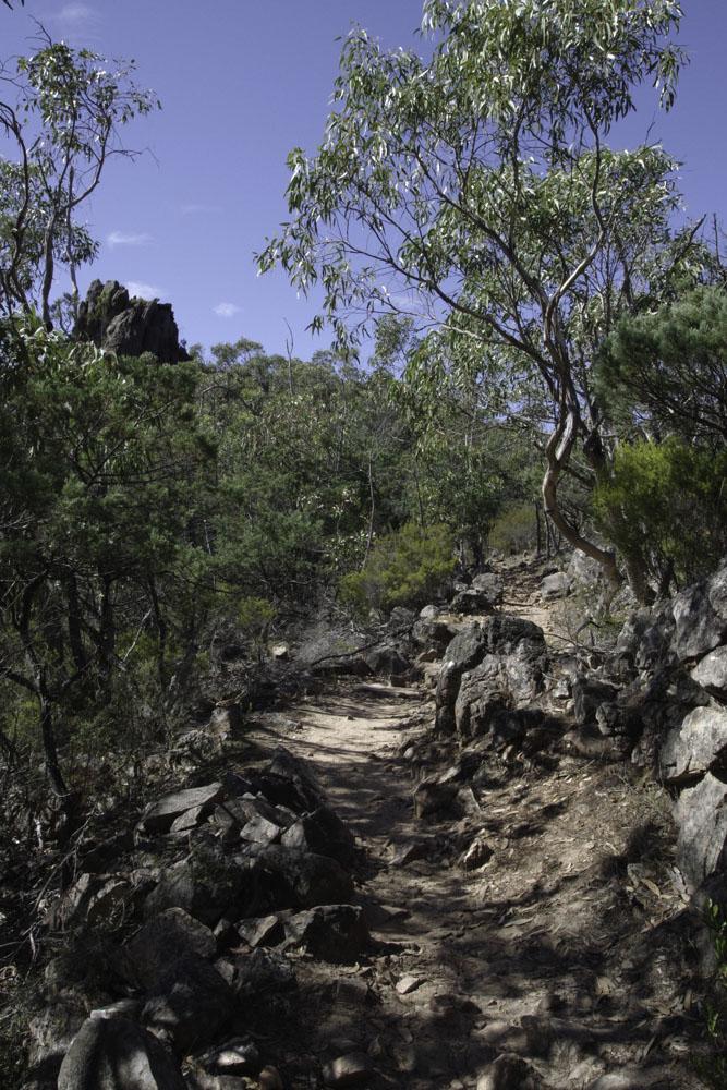 Sentier pour rejoindre Boronia Peak