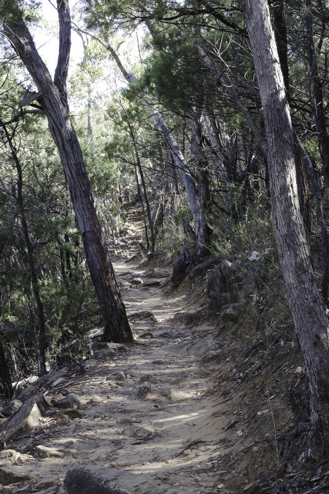 Randonnée vers Boronia Peak