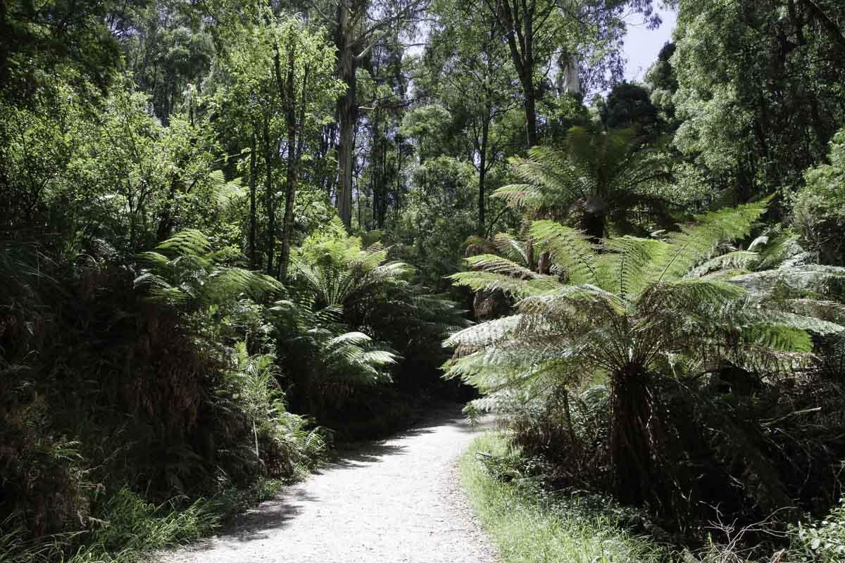 Foret Australienne dans les Dandenong Ranges