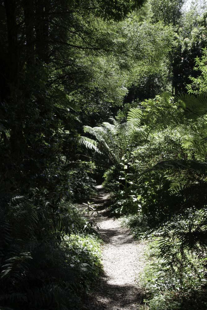 Fougères - Jardin botanique de Dandenong Ranges