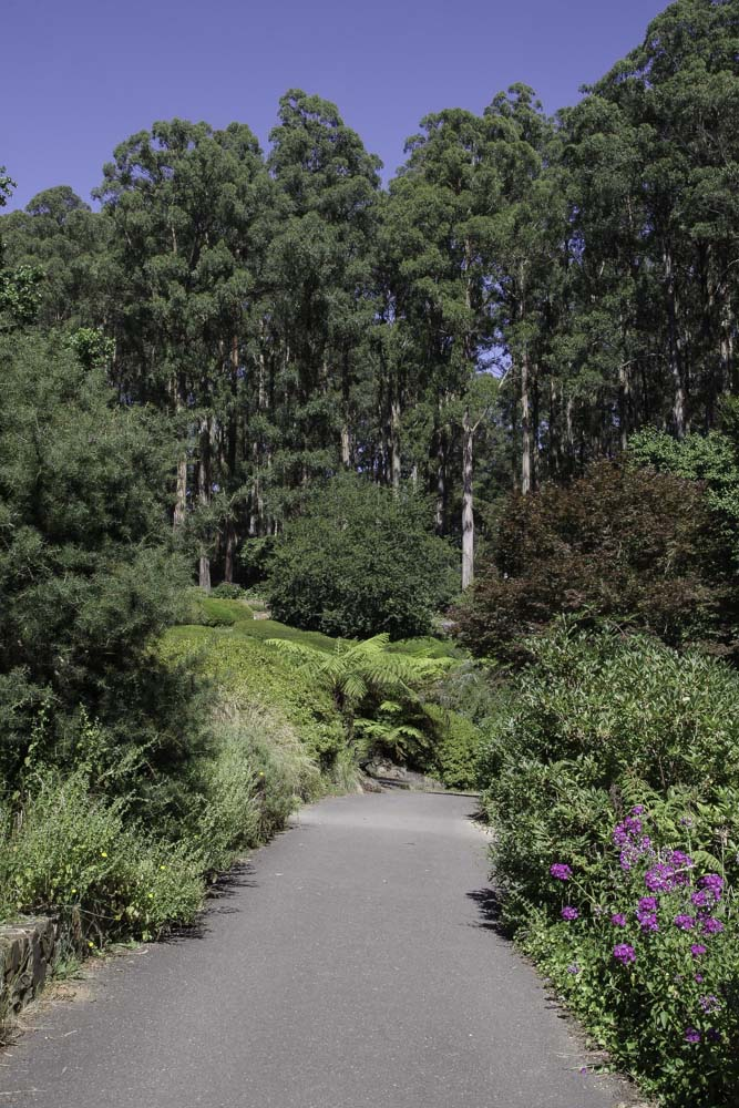 Jardin botanique de Dandenong Ranges