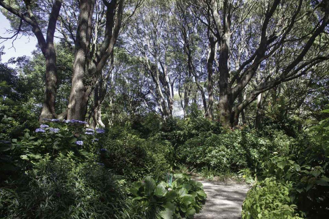 Jardin à l'anglaise au Sky High Mount Dandenong