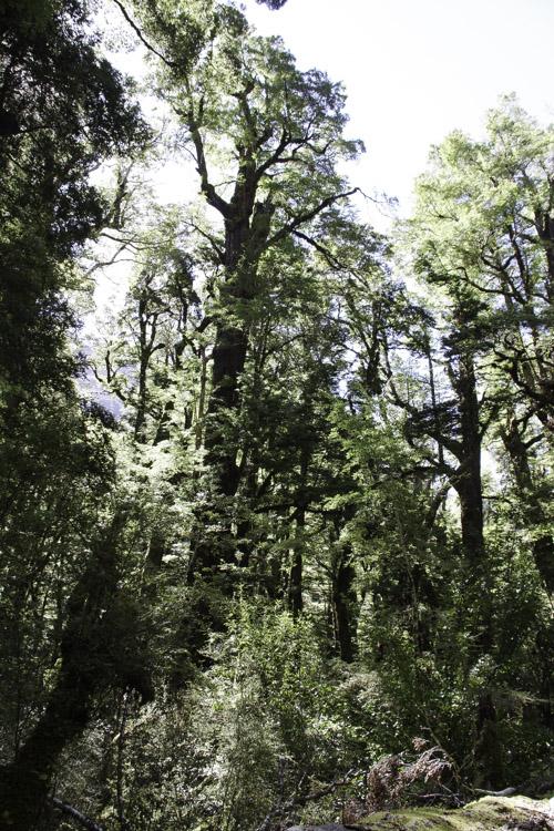 Lake Gum Nature Walk - Nouvelle Zelande