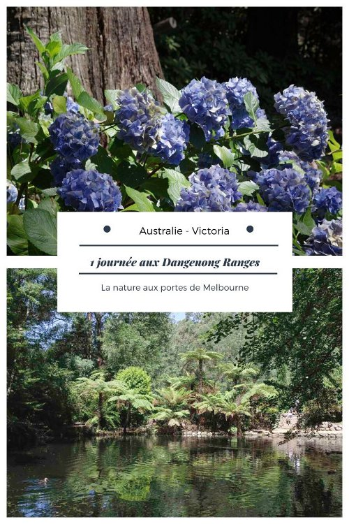 Que voir dans les Dandenong Ranges, la nature aux portes de Melbourne ?