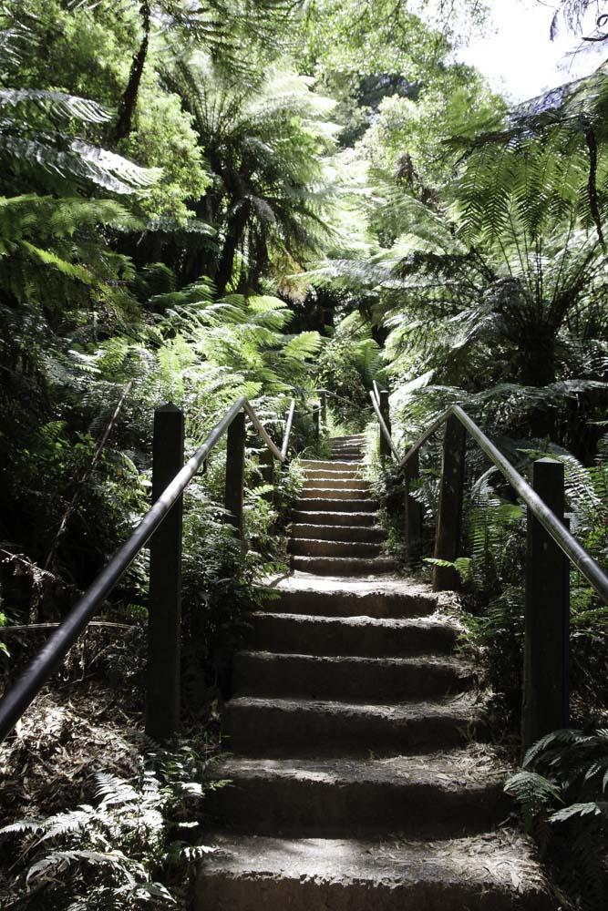 1000 Steps - Dandenong Ranges