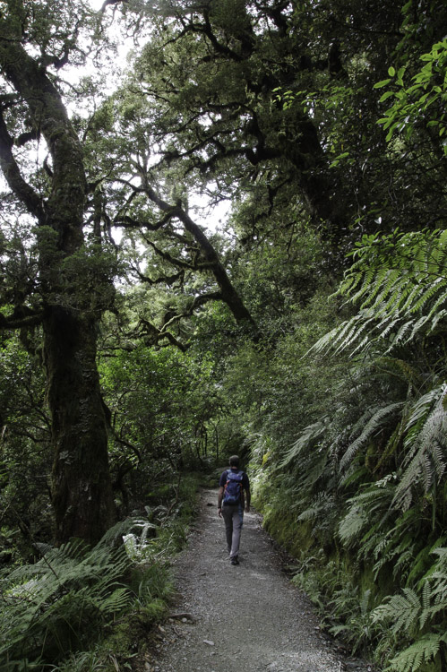 Randonnée de Key Summit - Fiordland National Park