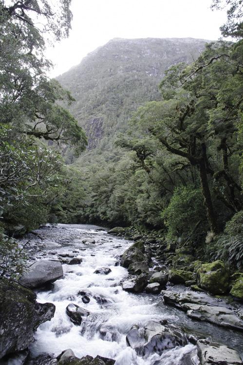 Rivière dans Fiorland National Park