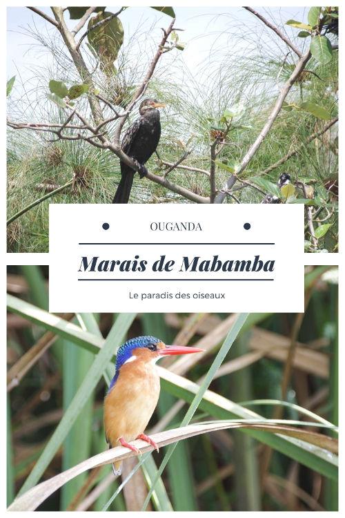 Observation des oiseaux au Marais de Mabamba près du Lac Victoria en Ouganda