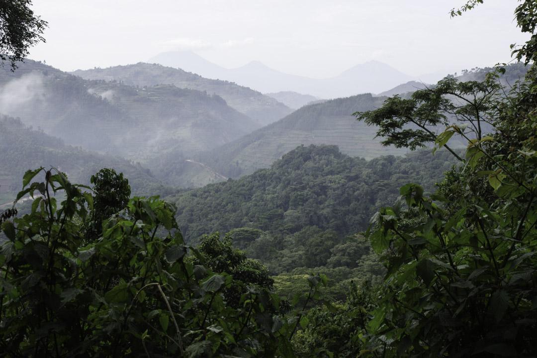 Forêt équatoriale de l'Ouganda